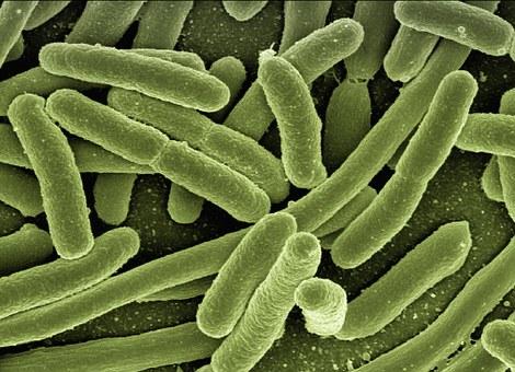 Las bacterias podrían ser la clave en casos de depresión