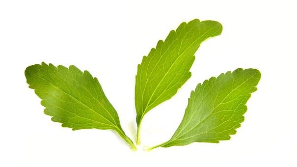 Algo sobre la stevia